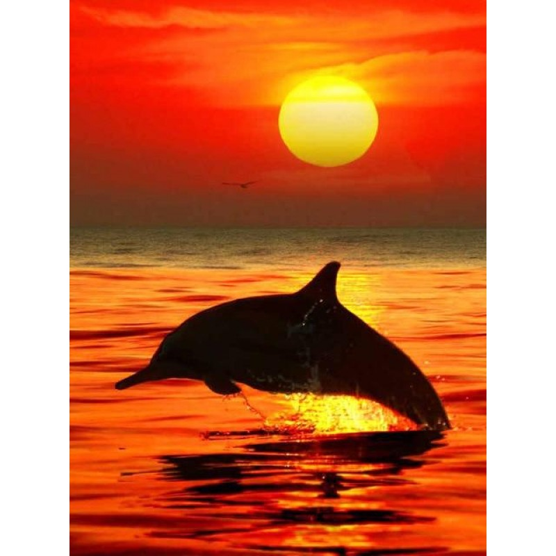 Dolphin in the sea