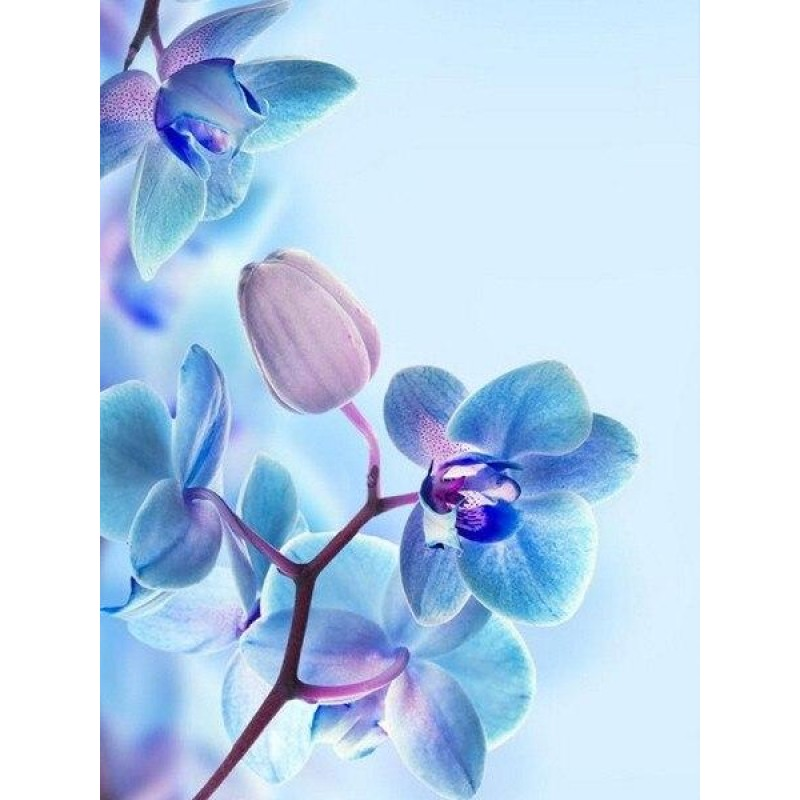 Colourful orchids cl...