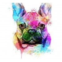 Radiant French Bulldog